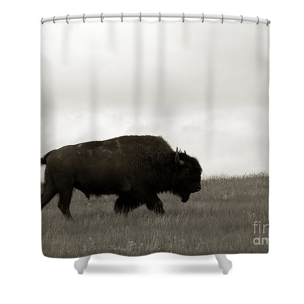 Lone Bison Shower Curtain
