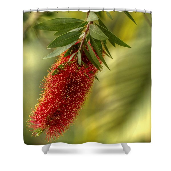 Lone Bottlebrush Shower Curtain