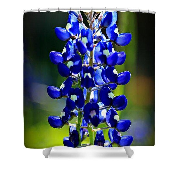 Lone Star Bluebonnet Shower Curtain