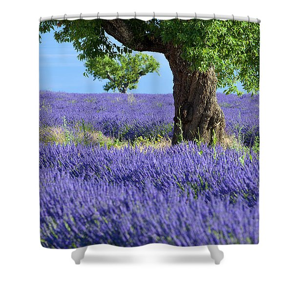 Shower Curtain featuring the photograph Lone Tree In Lavender by Brian Jannsen