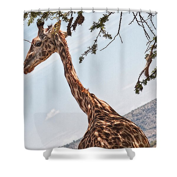 Shower Curtain featuring the photograph Look At My Slender Neck by Perla Copernik