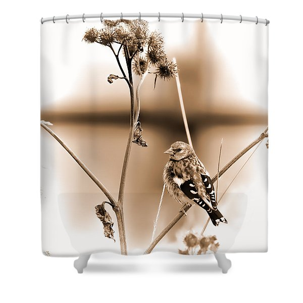Looking Sep Small Brown Grey Yellow And Black Bird Posing For Portrait On A Branch Of A Plant Shower Curtain