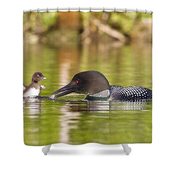 Loon Chick Excited For Breakfast Shower Curtain