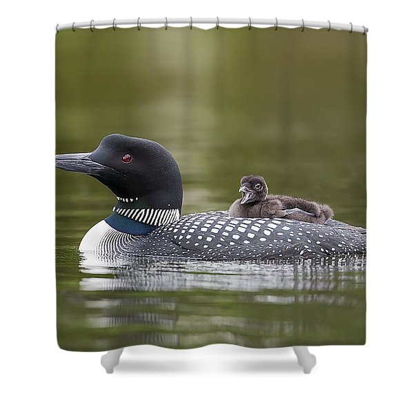 Loon Chick Yawn Shower Curtain