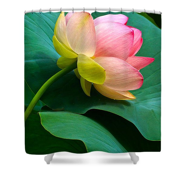 Lotus Blossom And Leaves Shower Curtain