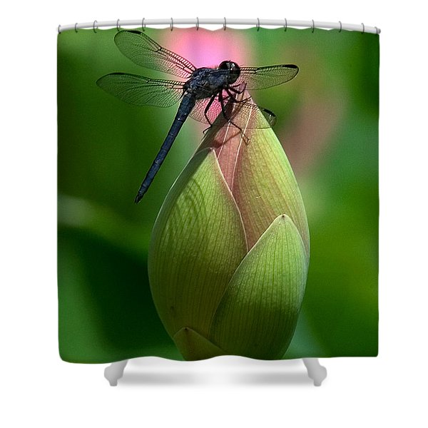 Lotus Bud And Slatey Skimmer Dragonfly Dl006 Shower Curtain