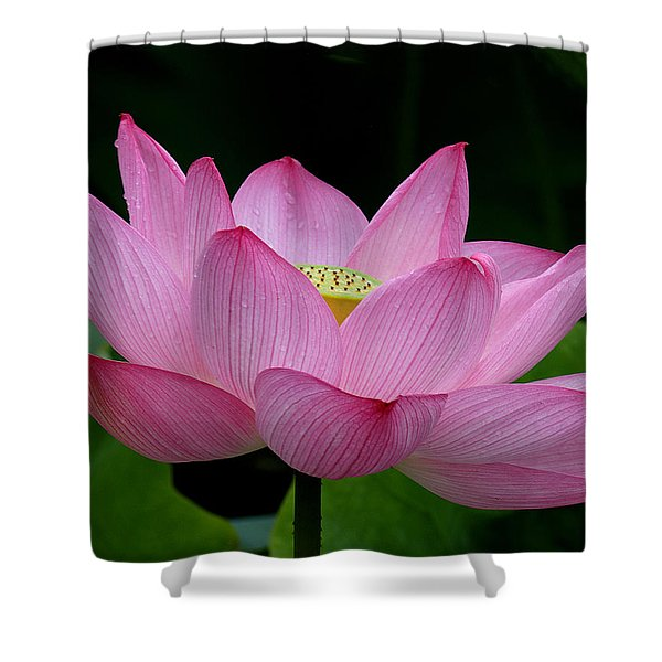 Lotus-center Of Being IIi Dl033 Shower Curtain