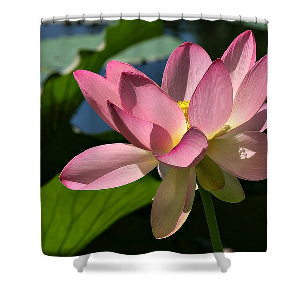 Lotus - Flowers Shower Curtain