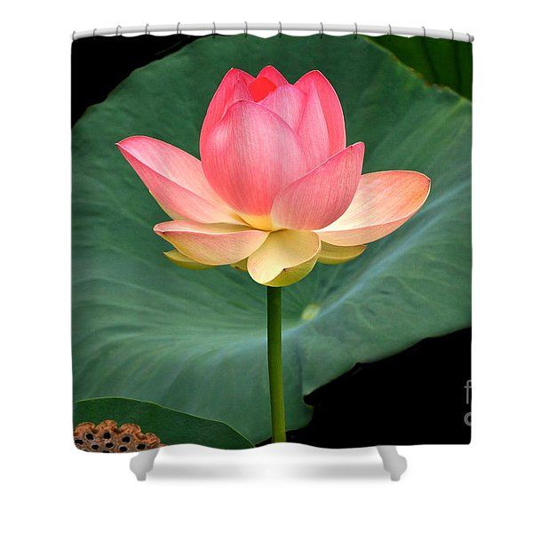 Lotus Of Late August Shower Curtain