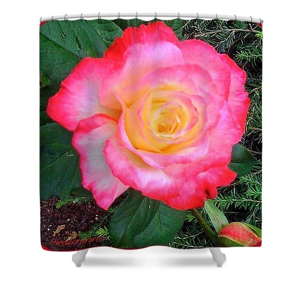 Love's First Blush - A Little Red And Shower Curtain
