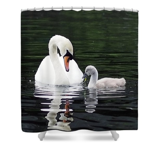 Lunchtime For Swan And Cygnet Shower Curtain