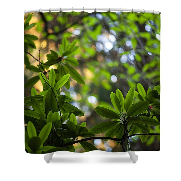 Lush Rhododendron Forest Shower Curtain