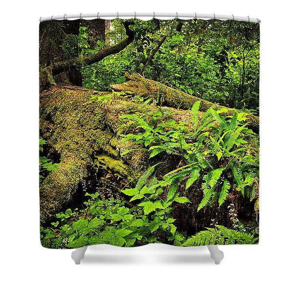 Lush Temperate Rainforest Shower Curtain