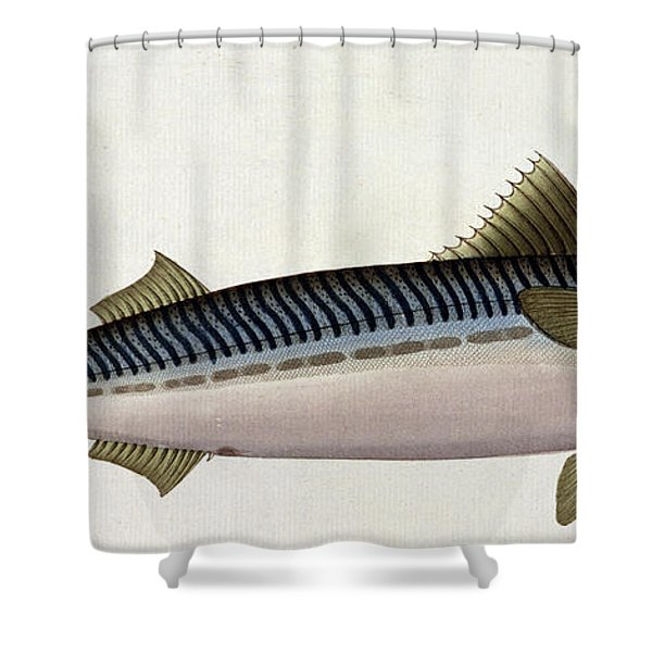 Mackerel Shower Curtain