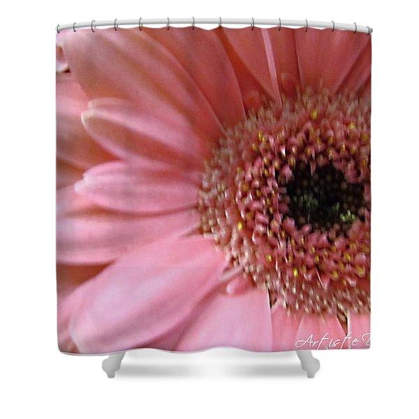 Macro Pink Gerbera Daisies Shower Curtain