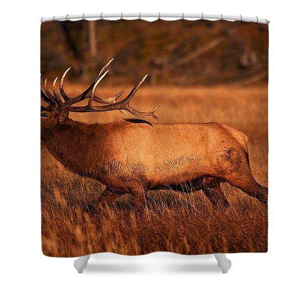 Madison Bull Shower Curtain