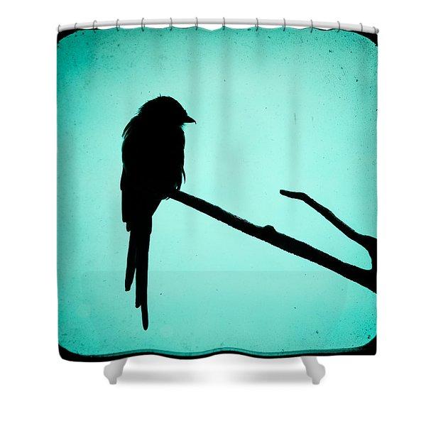 Magpie Shrike Silhouette Shower Curtain