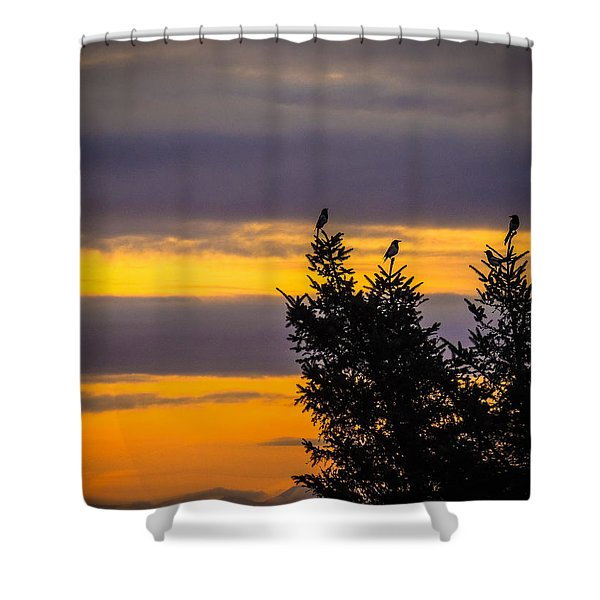 Magpies At Sunrise Shower Curtain