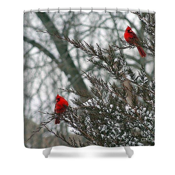 Male Cardinal Pair Shower Curtain