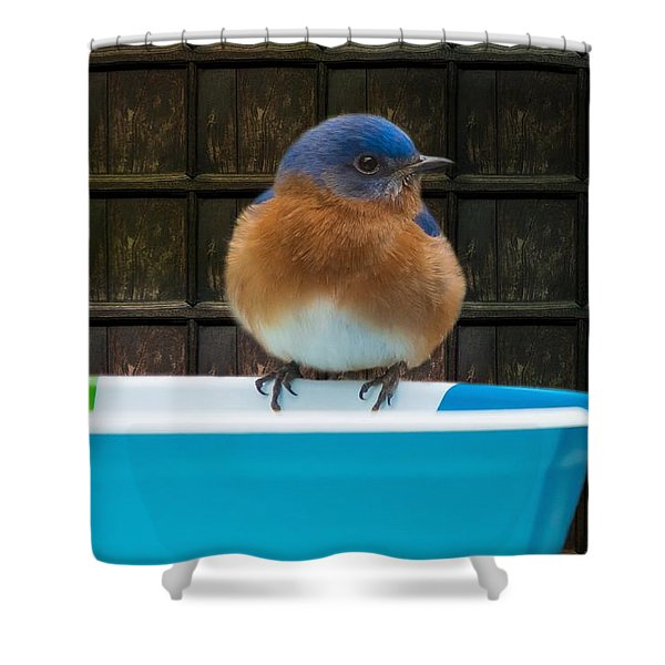 Shower Curtain featuring the photograph Male Eastern Bluebird by Robert L Jackson
