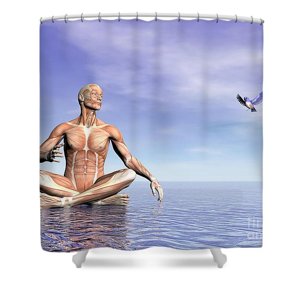 Male Musculature In Lotus Position Shower Curtain