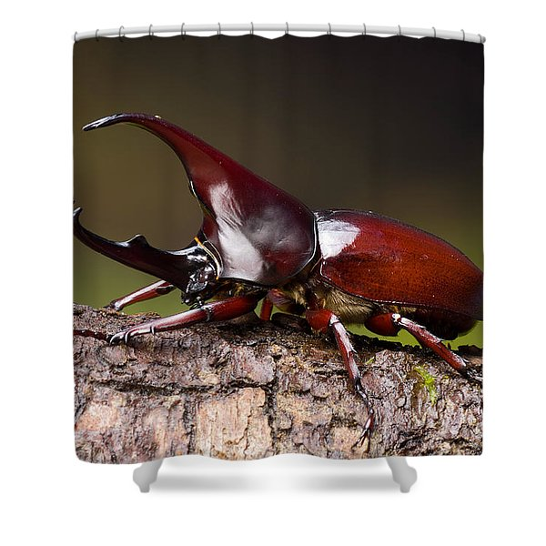 Male Rhinoceros Beetle Shower Curtain