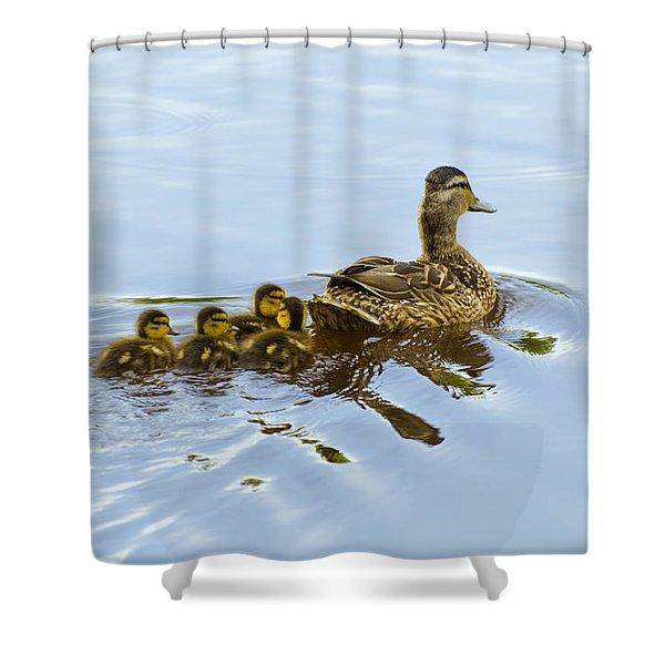 Mallard And Chicks  Shower Curtain