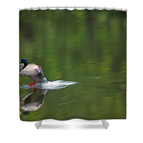 Mallard Splash Down Shower Curtain