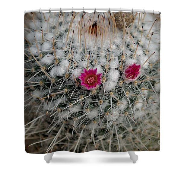 Shower Curtain featuring the photograph Mammillaria Geminispina by Scott Lyons