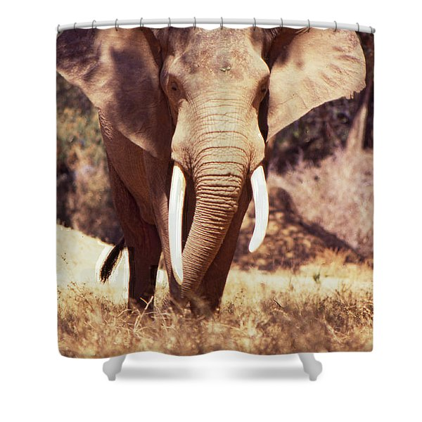 Shower Curtain featuring the photograph Mana Pools Elephant by Jeremy Hayden