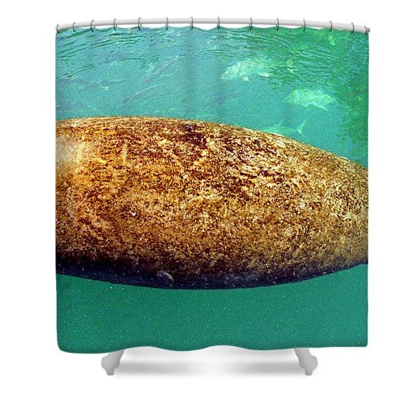 Manatee Swimming Shower Curtain