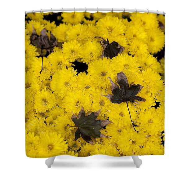 Maple Leaves On Chrysanthemum Shower Curtain