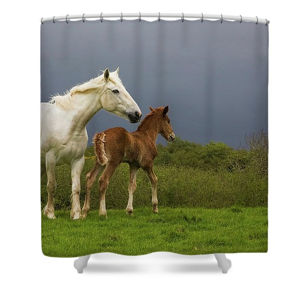 Mare And Foal, Co Derry, Ireland Shower Curtain