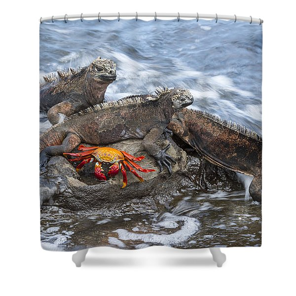 Marine Iguana Trio And Sally Lightfoot Shower Curtain