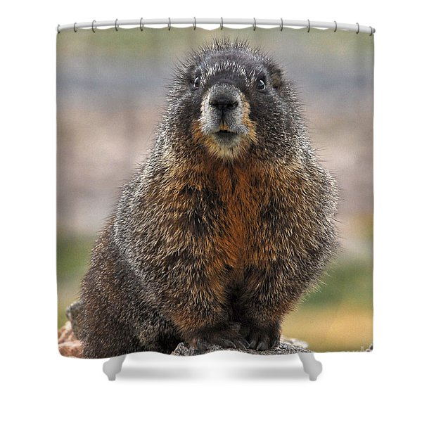 Shower Curtain featuring the photograph Marmot by Mae Wertz
