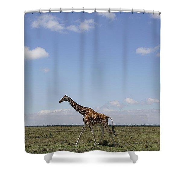 Masai Giraffe On Savanna Masai Mara Shower Curtain