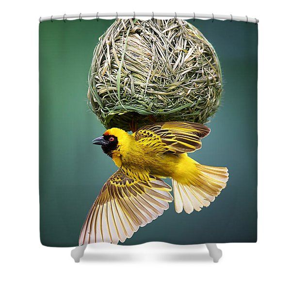 Masked Weaver At Nest Shower Curtain