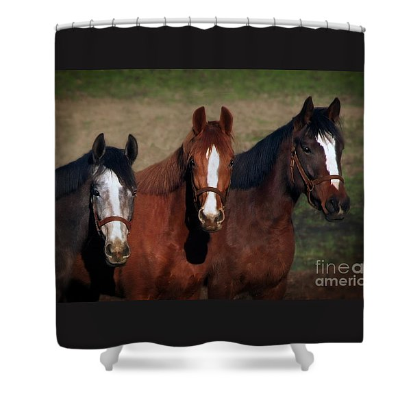 Shower Curtain featuring the photograph Mates by Melinda Hughes-Berland