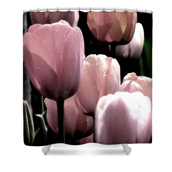 Mauve In The Morning Shower Curtain