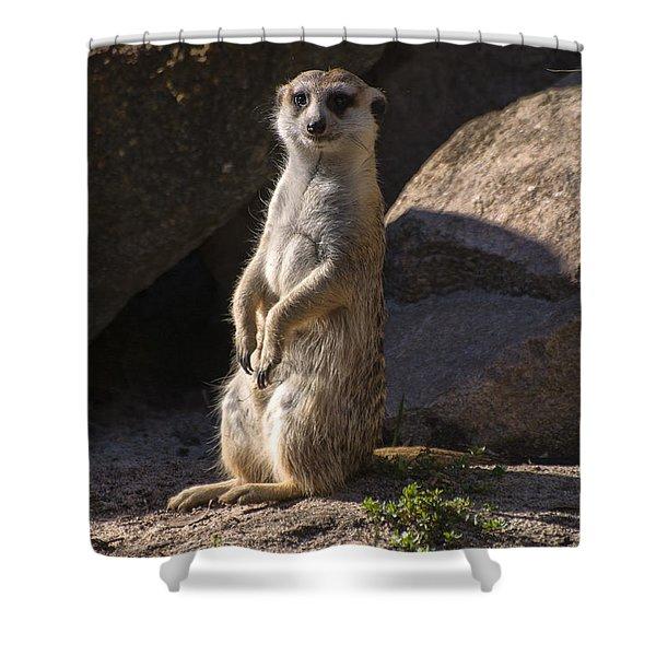 Meerkat Looking Forward Shower Curtain