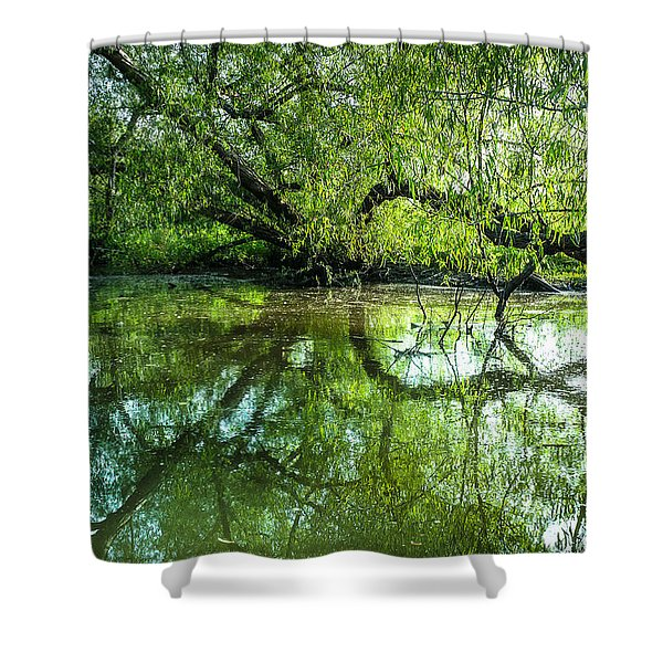 Meeting A Willow Tree In The Evening Shower Curtain