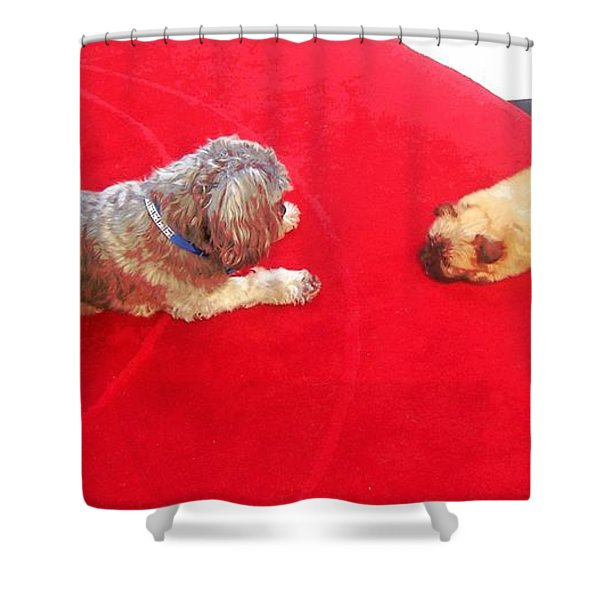 Dog And Puppy Pet Photography Lhasa Apso Shih Tzu Pomeranian   Shower Curtain