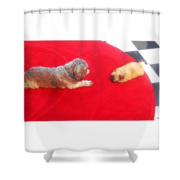 Dog And Puppy Pet Photography Lhasa Apso Shih Tzu Pomeranian   Shower Curtain