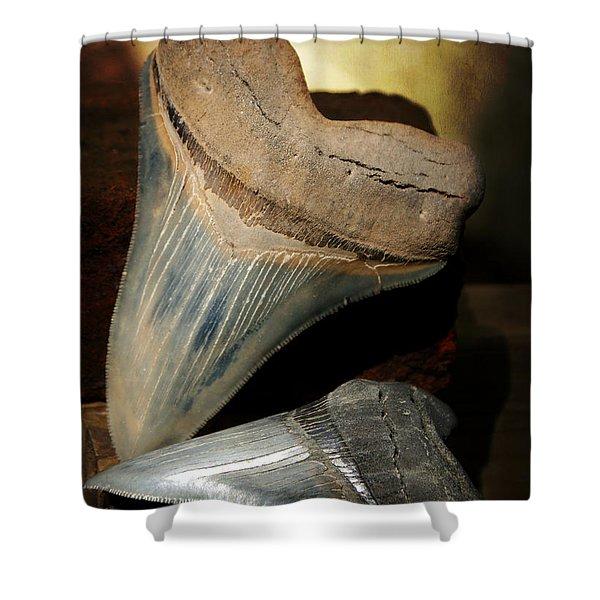 Megalodon Fossil Shark Teeth Shower Curtain