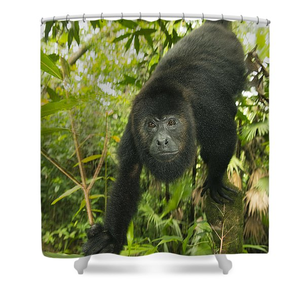 Mexican Black Howler Monkey Belize Shower Curtain