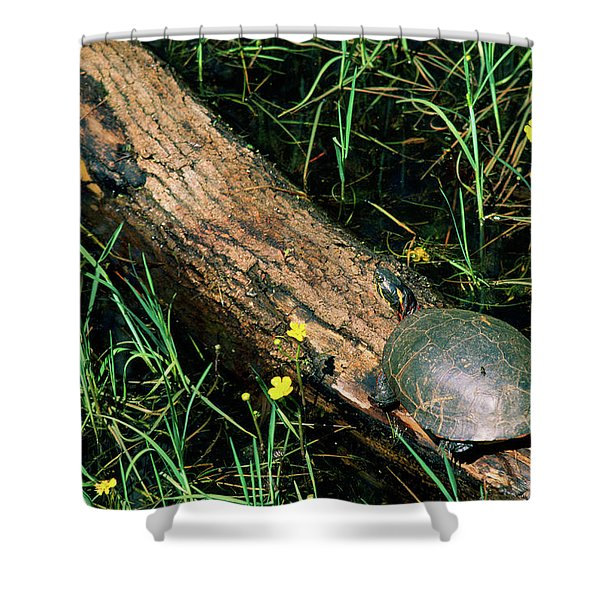 Midland Painted Turtle Chrysemys Picta Shower Curtain