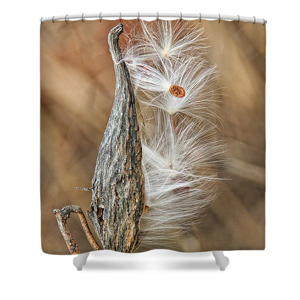 Milkweed Pod And Seeds Shower Curtain
