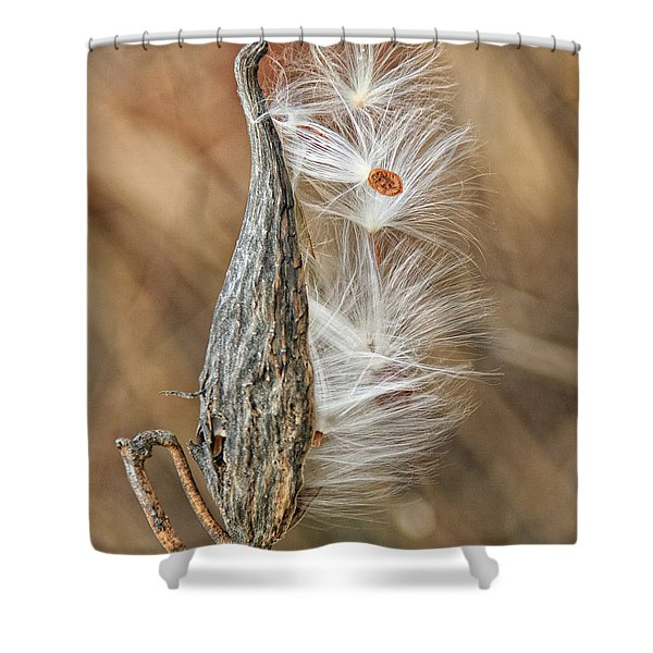 Shower Curtain featuring the photograph Milkweed Pod And Seeds by William Selander