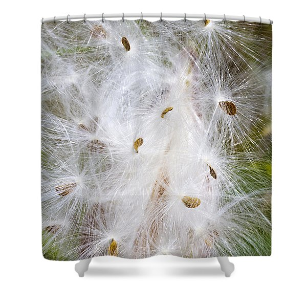Milkweed Seeds And Fluff Shower Curtain