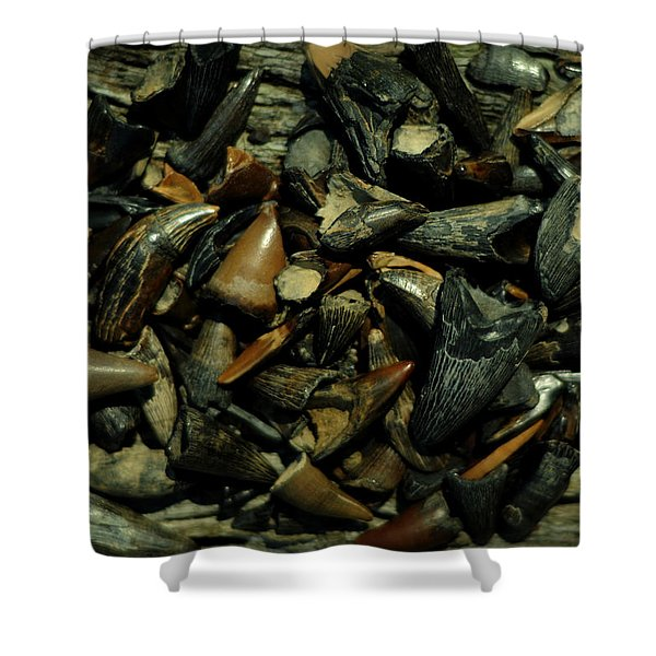 Miocene Fossil Crocodile Tooth Assortment Shower Curtain